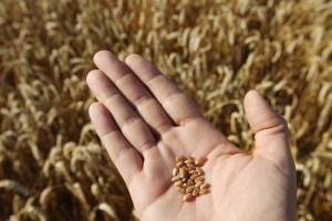 semi-agricoltura-gall